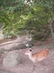 And Another Nara Deer!