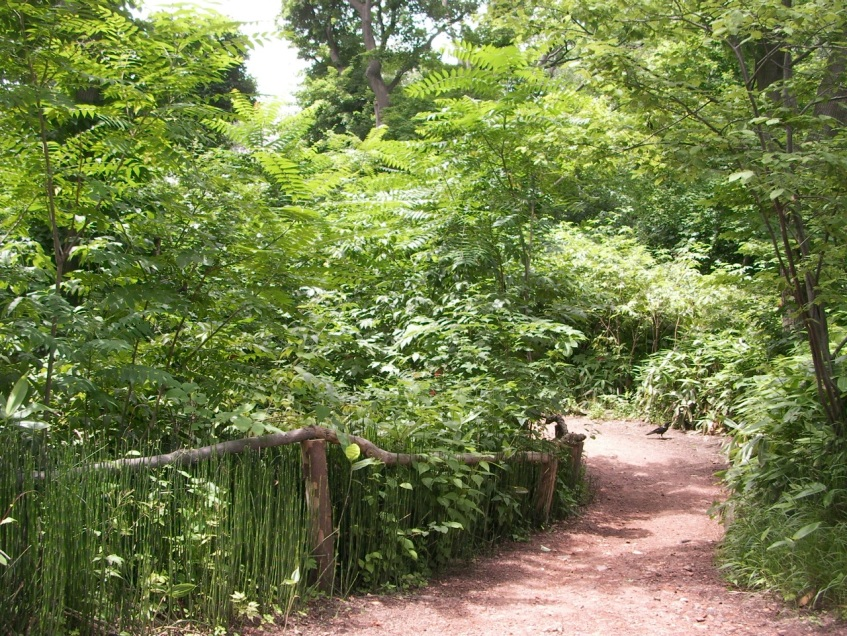 Botanical Gardens (and a Crow)