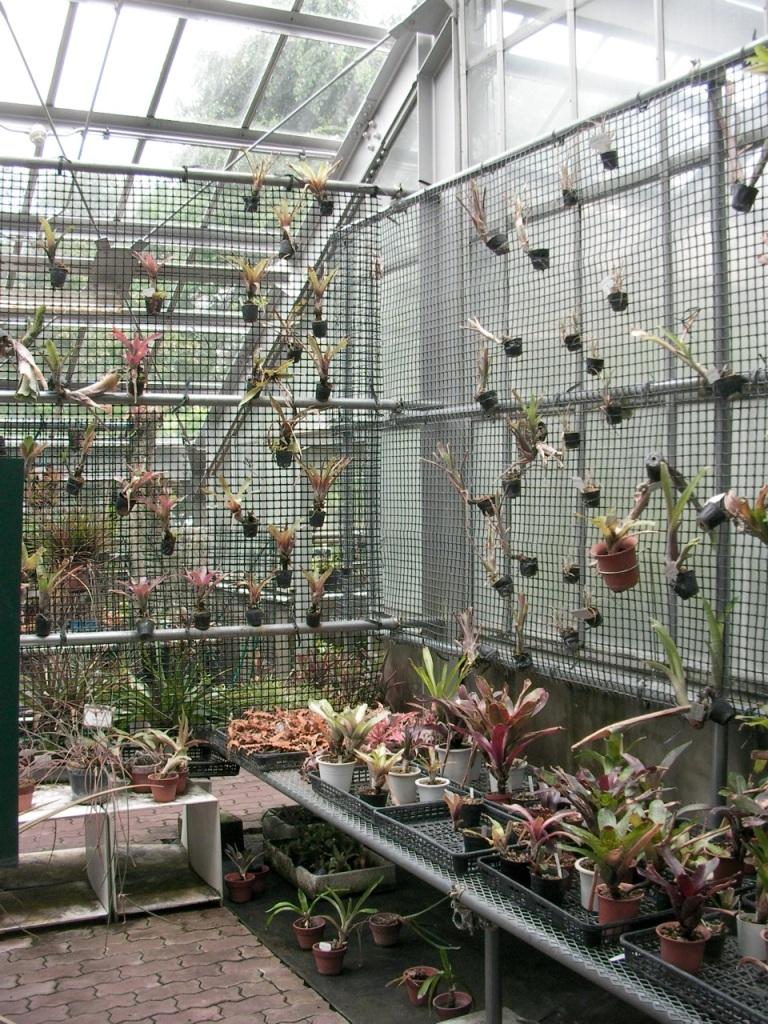 Botanical Gardens - Bromeliads
