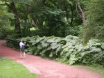 Botanical Gardens - Check those Leaves!