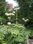 Botanical Gardens - Herbaceous Garden