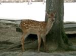 Deer here too!