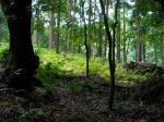 Fushimi-Inari Woods