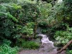 Kamakura - Daibutsu garden waterfall