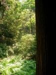 Kasuga Taisha Shrine Woods