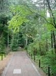 Kinkakuji Shrine Grounds