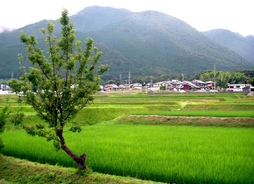 Lake Biwa Countryside
