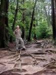 Me at the Roots, Kurama