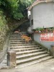 Miyajima Stroll