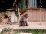 Mother and Baby, Arashiyama Monkey Park