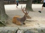 Nara deer (しか‹)