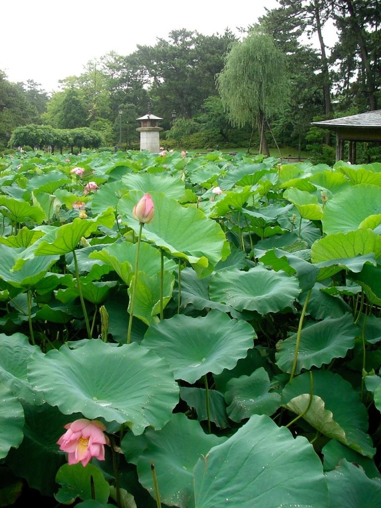 Niigata - Hakusan Shrine Park