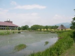Pond and Museum