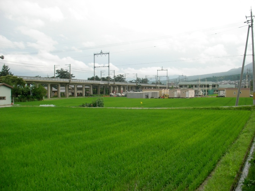 Rice Fields and Railroad Tracks