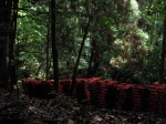 Stacks of Miniature Torii