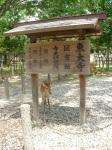 Todaiji Temple sign - and deer