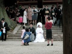 Wedding Party, Kasuga Taisha Shrine, Nara